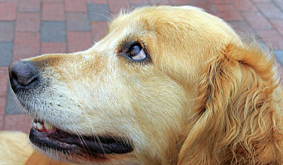Photograph - A Dog's Profile by Cora Wandel
