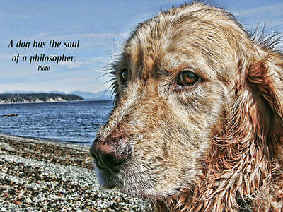 Photograph - A Dog's Soul by Rhonda McDougall