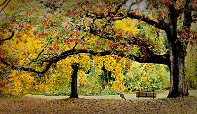 The Old Oak Tree Print by Diana Angstadt