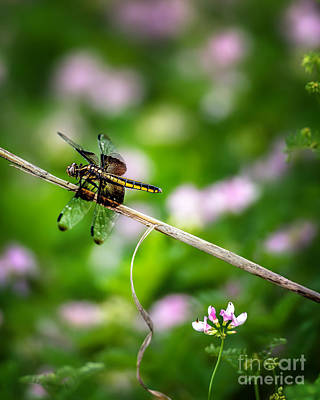 Photograph - A Dragonfly Break by Tamyra Ayles