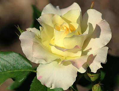 Flowers Photograph - A Dream Of A Rose by Rosanne Jordan
