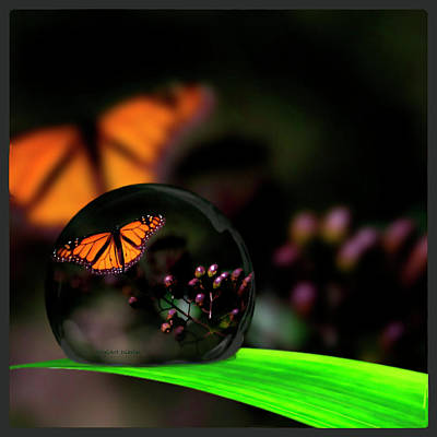 Photograph - A Drop Of Beauty by DigiArt Diaries by Vicky B Fuller