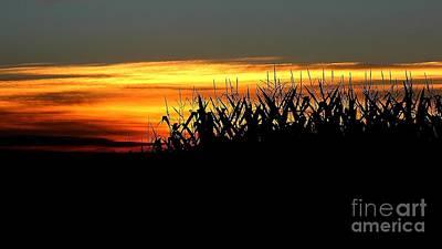 Photograph - A Drop Of Sun by Jenny Revitz Soper
