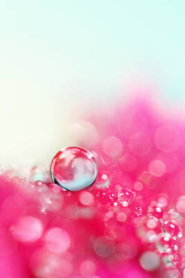 Photograph - A Drop With Raspberrys And Cream by Sharon Johnstone