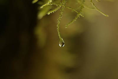 Photograph - A Droplet Hanging On by Jeff Swan