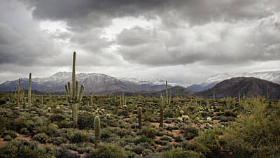Photograph - A Dusting Of Desert Snow On The Mountain  by Saija Lehtonen