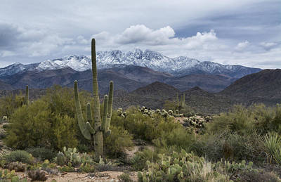 Photograph - A Dusting Of Snow In The Sonoran Desert  by Saija Lehtonen