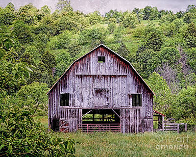 Photograph - A Face In The Barn by Kerri Farley