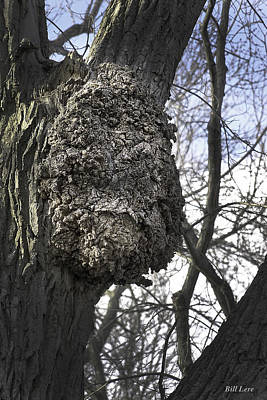Photograph - A Face In The Trees-1 by Bill Lere