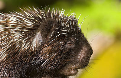 Spines Photograph - A Face Only A Mother Could Love by Mike  Dawson