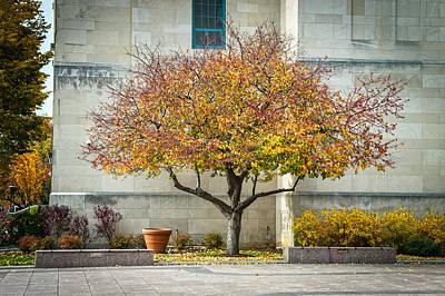 Photograph - A Fall Tree by Andrew Kazmierski
