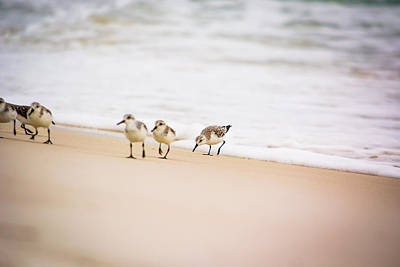 Photograph - A Family Of Sandpipers by Shelby Young
