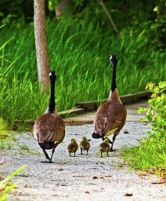 Print featuring the photograph A Family Stroll by Edward Peterson