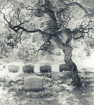 Headstone Photograph - A Family Tree  by Jessica Jenney