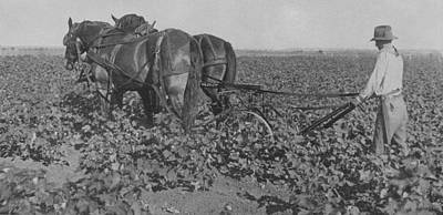 Horse-drawn Plow Photograph - A Farmer Using A Cultivator  by American School