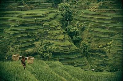 A Farmer Walks Past Terraced Rice Art Print by Donna K. & Gilbert M. Grosvenor