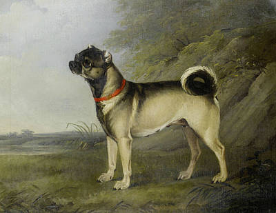 Painting - A Favourite Pug Bitch by Treasury Classics Art