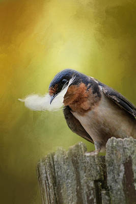 Swallow Photograph - A Feather For Her Nest by Jai Johnson