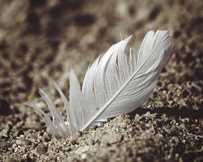 Photograph - A Feather In Time by Corey Haynes