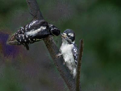 Digital Art - A Female Downy Woodpecker Feeding Suet To A Young Downy. by Rusty R Smith