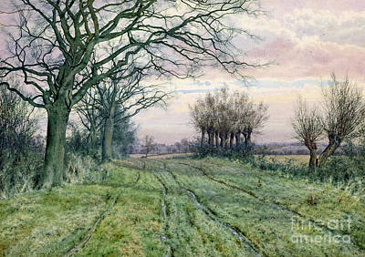 On Paper Painting - A Fenland Lane With Pollarded Willows by William Fraser Garden