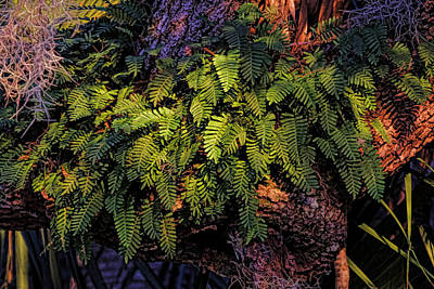Photograph - A Fern Botanical By H H Photography Of Florida by HH Photography of Florida