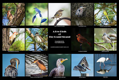 Photograph - A Few Birds Of The Grand Strand Poster by Van Sutherland