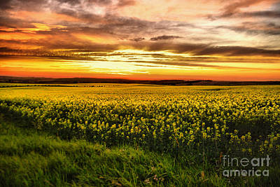 Photograph - A Field Full Of Yellow Flowers by Jeff Swan