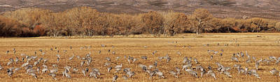 Photograph - A Field Of Cranes by Leda Robertson