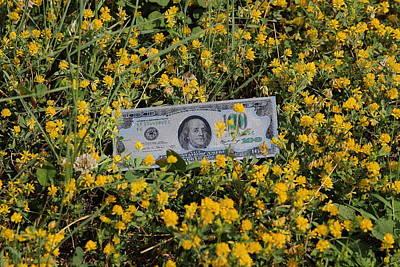 Meadow Photograph - A Field Of Dollars by Samantha Mattiello