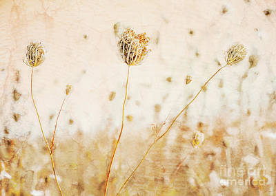Priska Wettstein Pink Hues - A Field of Queen Annes Lace by Hal Halli