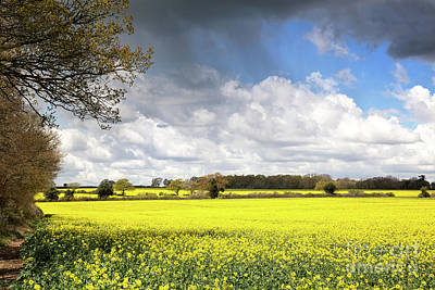 Rape Photograph - A Field Of Rape Flowers by Jane Rix