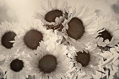 Photograph - A Fine Sunflower Day 2 by Sandra Ramacher