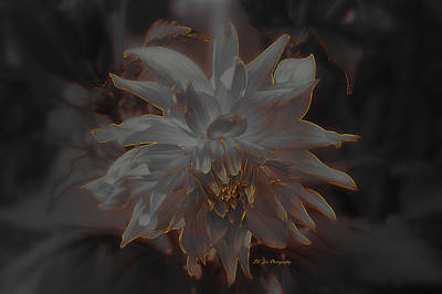 Photograph - A Fire Within by Jeanette C Landstrom