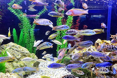 Photograph - A Fish Tank With Colorful Tropical Fish by Yali Shi