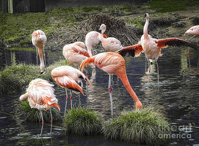 Photograph - A Flamboyance Of Flamingos by Melissa Messick