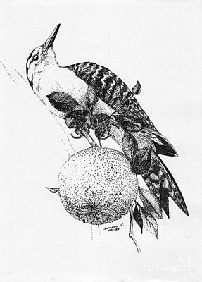 Drawing - A Flicker And An Orange by Suzanne McKee