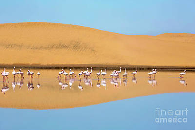 Photograph - A Flock Of Lesser Flamingos In Walvis Bay, Namibia by Julia Hiebaum