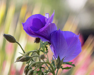 Photograph - A Floral Embrace by Ryan Seek
