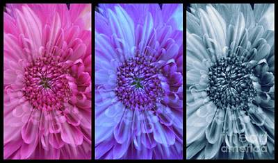 Photograph - A Floral Triptych  by Joan-Violet Stretch