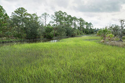 Photograph - A Florida Fen by John M Bailey