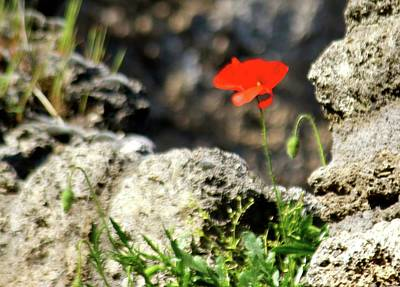 Photograph - A Flower In The Ruins Of Pompei by Janice Aponte