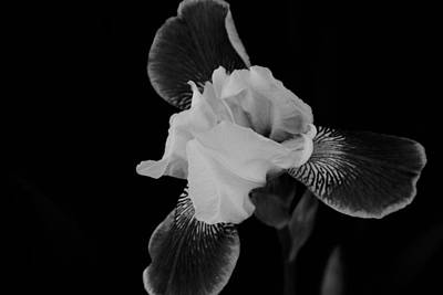 Photograph - A Flower by John Schneider