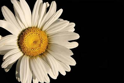 Photograph - A Flower Named Daisy by David Andersen