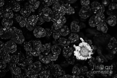 Flowers And Water Drops Wall Art - Photograph - A Flower With Water Drops by Masako Metz