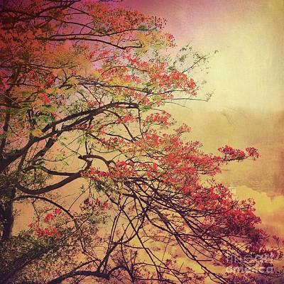 Photograph - A Flowering Tree At Angkor Wat by Tamara Lee