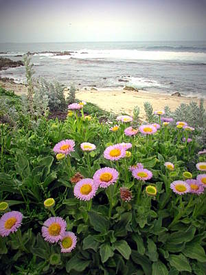 Photograph - A Flowery View Of The Pacific by Joyce Dickens
