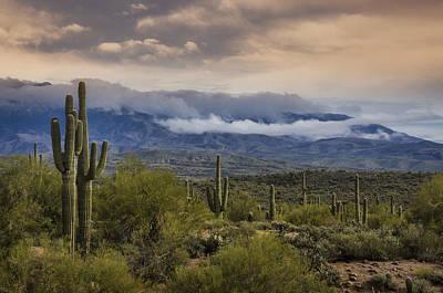 Photograph - A Foggy Desert Evening  by Saija  Lehtonen