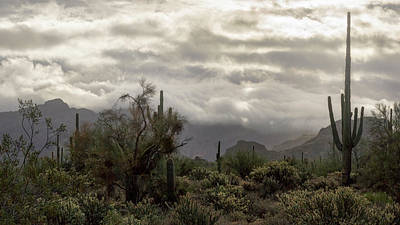Photograph - A Foggy Desert Morning  by Saija Lehtonen