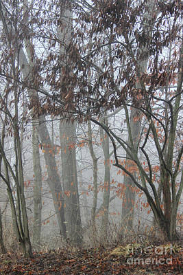 Photograph - A Foggy Morn by Karen Adams